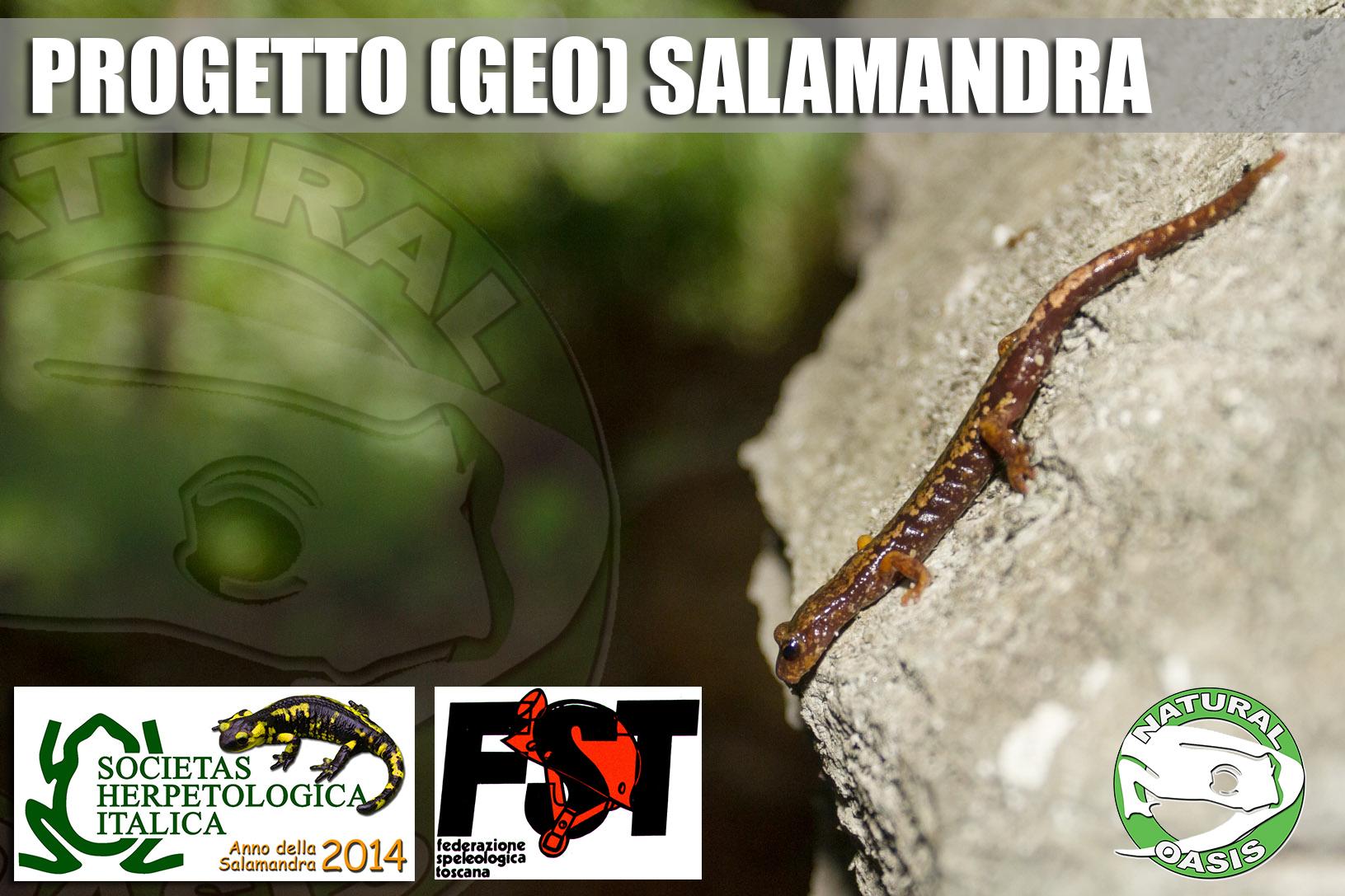 Progetto (geo)salamandra